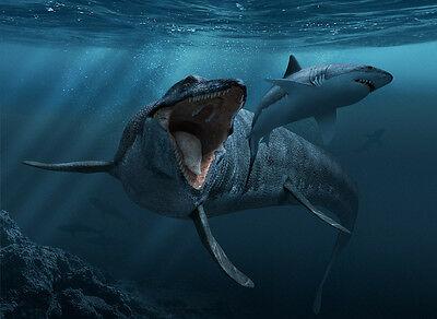 Dent-de-Mosasaure-fossile-avec-racine-Fossil-_1