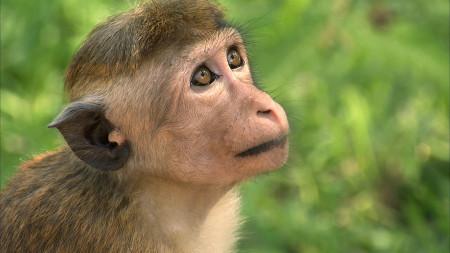 Destins-de-singes-18
