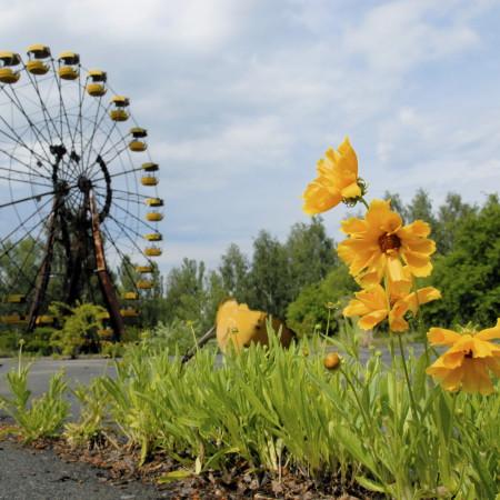 NATURE FIGHTS BACK IN CHERNOBYL - Tchernobyl, une histoire naturelle? 6
