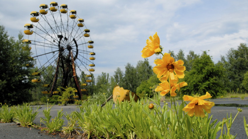 NATURE FIGHTS BACK IN CHERNOBYL - Tchernobyl, une histoire naturelle? 6