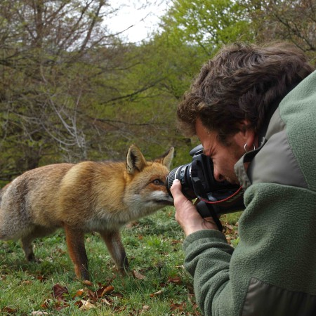 ON THE TRAIL OF THE FOX - Sur les traces du renard 4