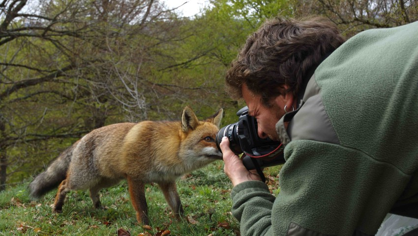 ON THE TRAIL OF THE FOX - Sur les traces du renard 4