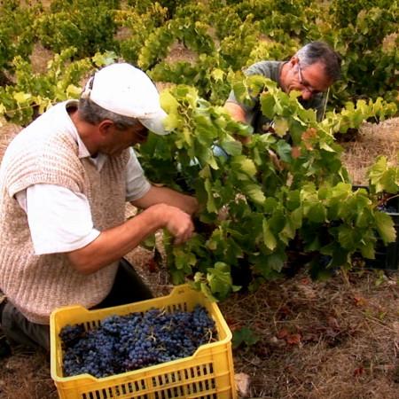 Photo vignes espagne