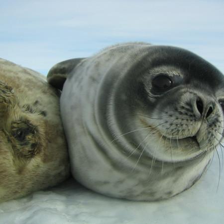 RUSH HOUR ANTARCTICA - Antarctique, printemps express 9