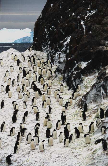 TOPSY TURVY PENGUIN – Comme un manchot sans ailes 5