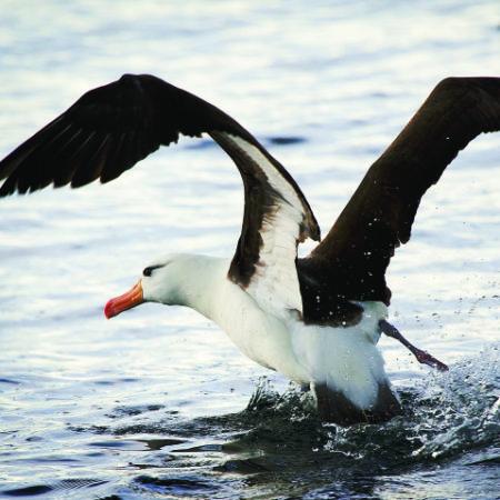 albatros-850x479